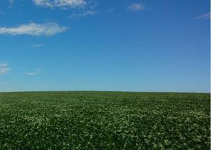 Excelente fazenda com 158 alq na região de maua da serra pr