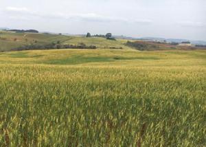 Excelente fazenda com 69 alqueires na região de roncador pr