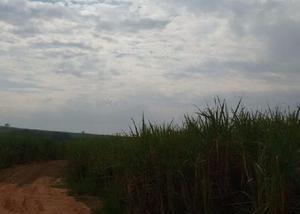 Fazenda com 1.275 alq. em cana região de presidente