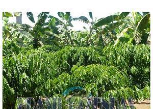 Fazenda em una. 260 hectares