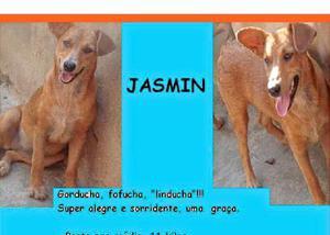 Jasmin - linda filhote, muito boazinha