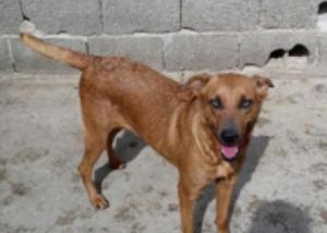 Linda cachorrinha kiara procura lar responsável e amoroso