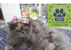 Pet shop para gatos