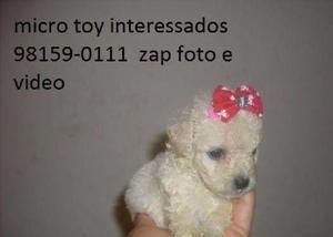 Poodle zero 98159-0111 porte pequeno sem enganos