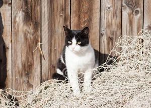 Rede tela proteção gatos campos goytacazes