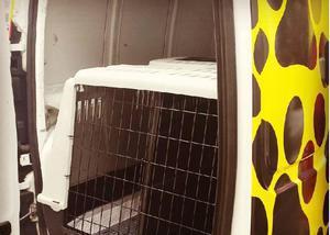 Táxi para cães e gatos - serviço especializado