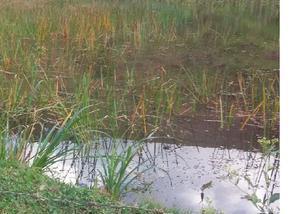 Sitio em tabuleiro com 12 hectare em tabuleiro mg