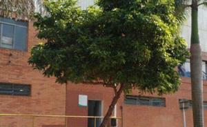 Focco ambiental - poda de árvores