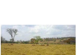 Fazenda de 337 alqueires pecuária região padre bernardo go