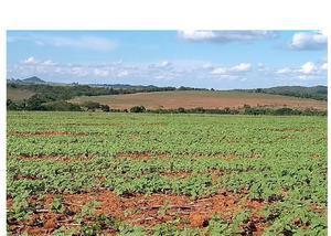Fazenda de 43 alqueires lavoura região de morrinhos go