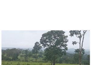 Fazenda de 479 alqueires pecuária região de ipameri go