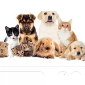 Site para o seu pet! eternize momentos com que você ama