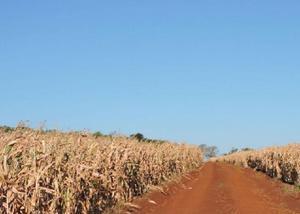 Oportunidade de fazenda com 487 alqueires em ponta porã ms