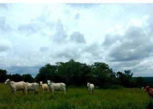 Oportunidade fazenda com 4.347 hectares em campo grande ms