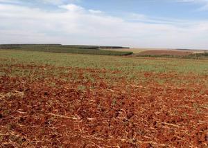 Oportunidade d fazenda com 284 alq maracaju ms longo prazo