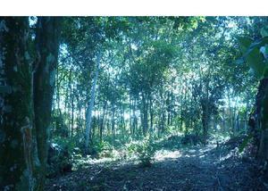 Terreno à venda no iranduba, 1.250m², 2 lotes um ao lado.