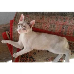Doaçao de filhotes de gato - 3 f