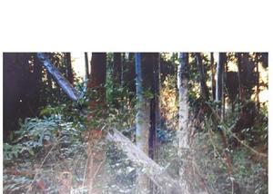 Fazenda eucalipto citriodora área 370 ha,- 350 mil m3