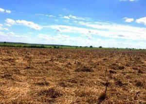 Oportunidade de fazenda com 200 hectares em dourados ms