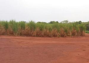 Fazenda 82 alqueires região de ribeirão preto
