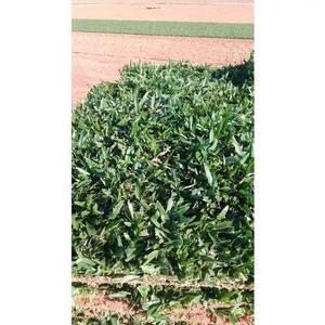 Venda de grama pra toda regiao sul