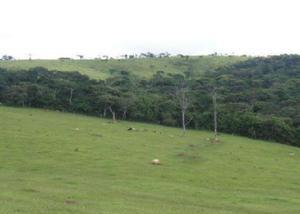 Fazenda pecuária -lorena - sp (6701)
