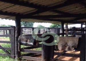 Fazenda pecuária - novo mundo - go (6710)