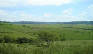 Fazenda pecuária c/ 629 há em marília - sp (6264)