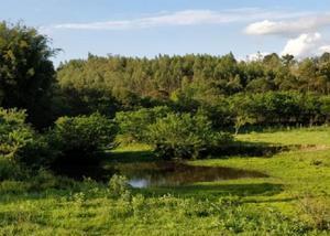 Sítio 6,2 hectares - campo pinheiro - nova hartz - rs
