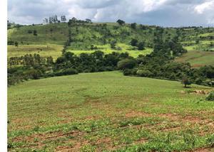 Excelente fazenda com 380 alqueires na região de faxinal pr