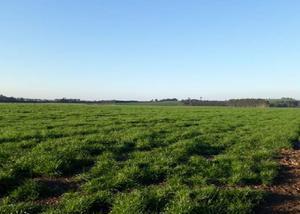 Fazenda com 534 alqueires na região de são matheus do sul