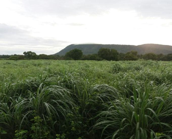 Fazenda 160 alqueires- gurupi-to região figueirópolis-to
