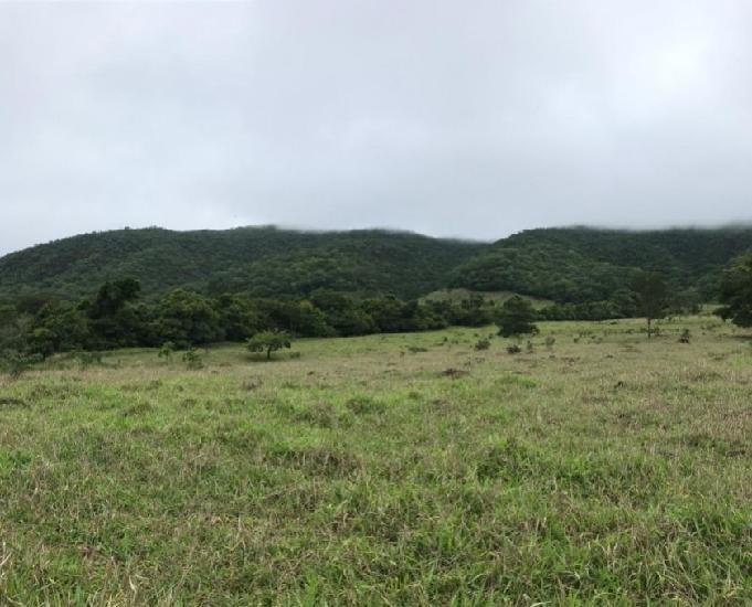 Fazenda 18.5 alqueires 90 hectares- taquaral de goiás