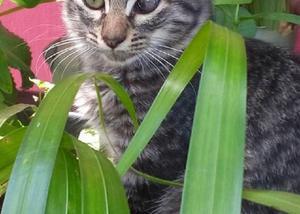 Gatos da cor rajada para adoção responsável!!!
