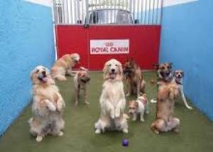 Adestrador de cães em moema indianópolis