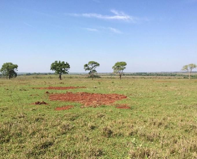 Excelente fazenda com 1.623 hectares em campo grande ms