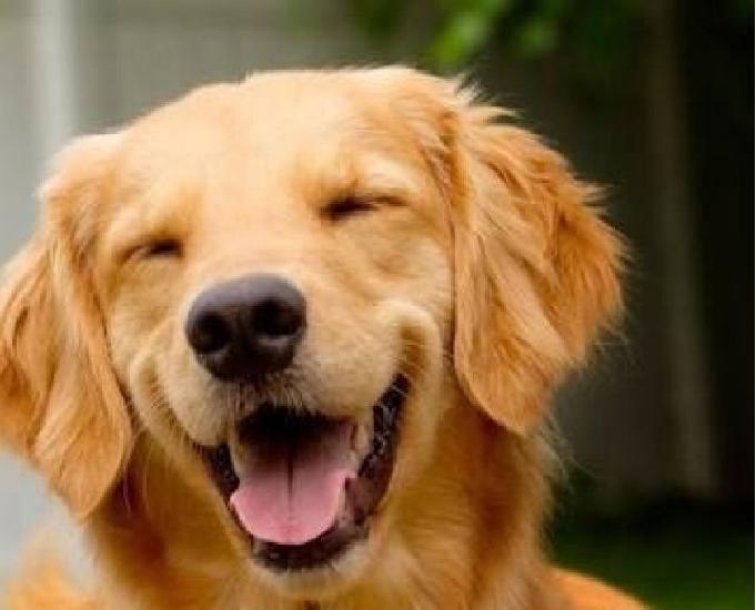 Passeadores de cães pet sitter