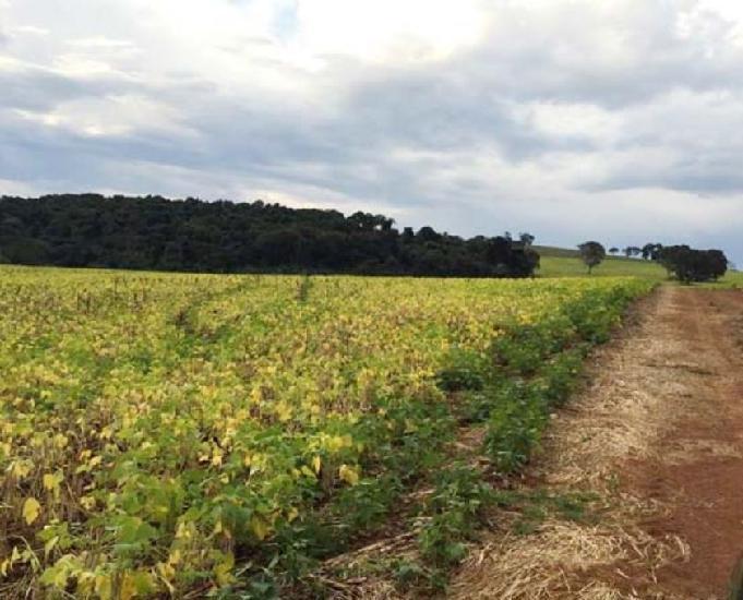 Fazenda para café, grãos e leite região serrania-mg