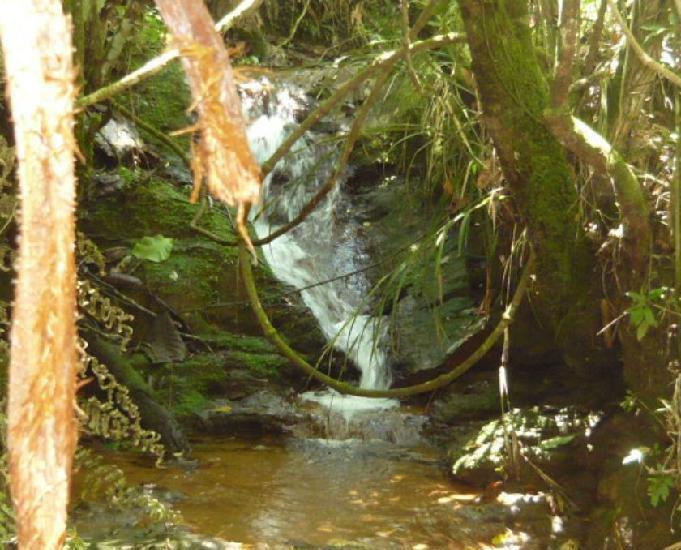 Fazenda com riacho,cascata e nascentes próprias de água!!!