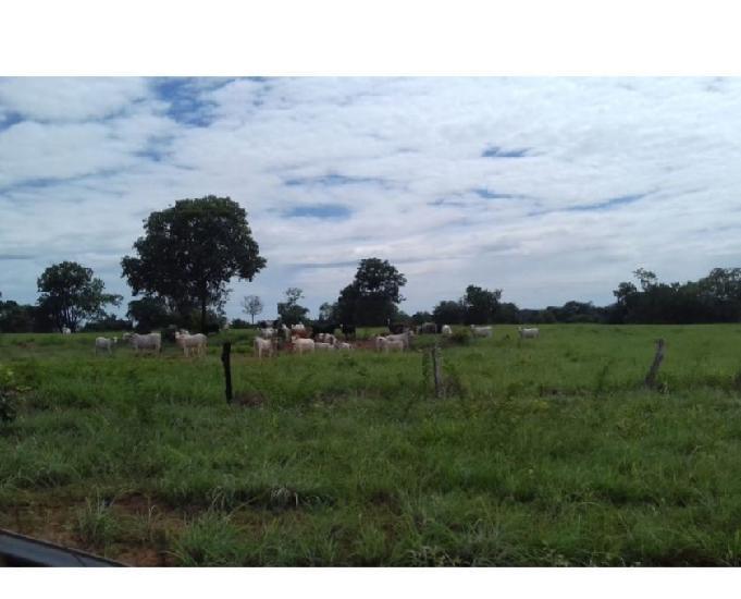 Fazenda 212 alqueires (1026 hectares) talismã-to