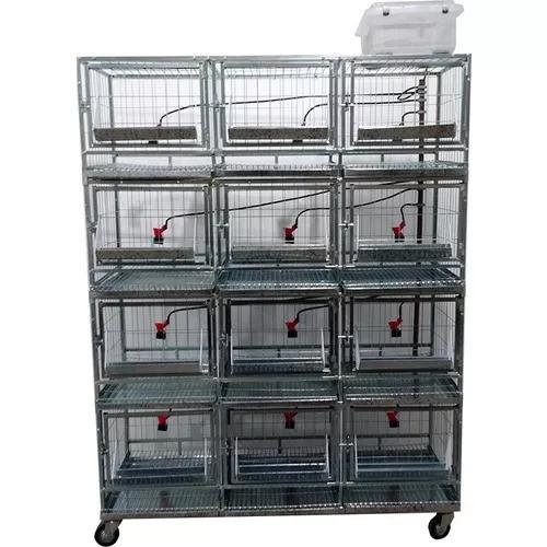 Bateria de 12 gaiolas para galinha - chocmaster