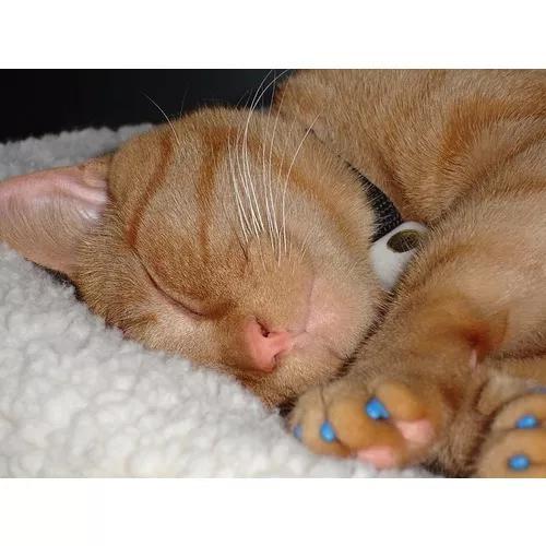 Capa protetora gato 20 unhas