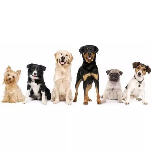 Fórmulas de ração para cães e gatos