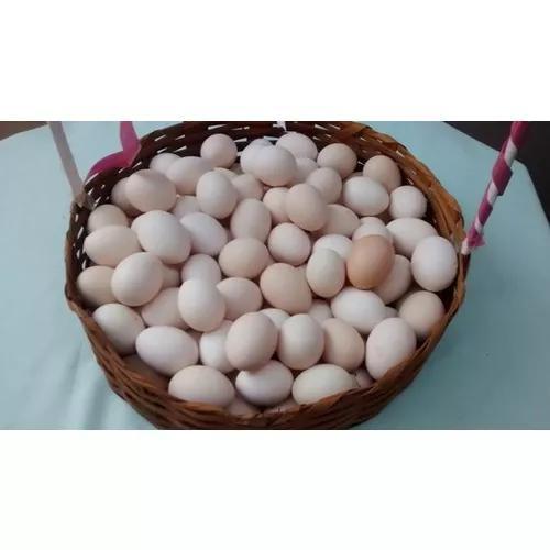 Ofertaço: ovos galados de músico brasileiro