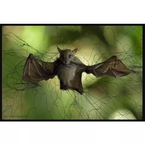 Rede pegar morcego passarinho 15 m x 2,5 m