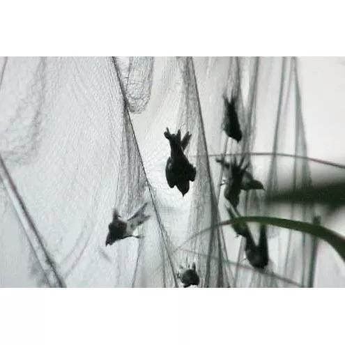 Rede pegar morcego-pássar 3m x10m 30m² 5 bolsas
