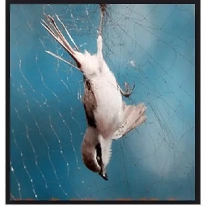Rede pegar passarinho morcego pássaro 10x2,5m # 17mm