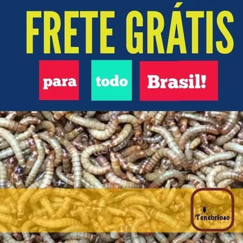 Tenébrio molitor 100 larvas vivas - frete grátis brasil
