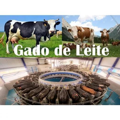 Curso de criação e manejo de gado leiteiro completo +