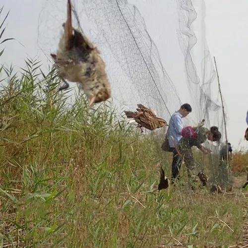 Rede neblina pega pássaro morcegos 10x3 mts 15x15mm